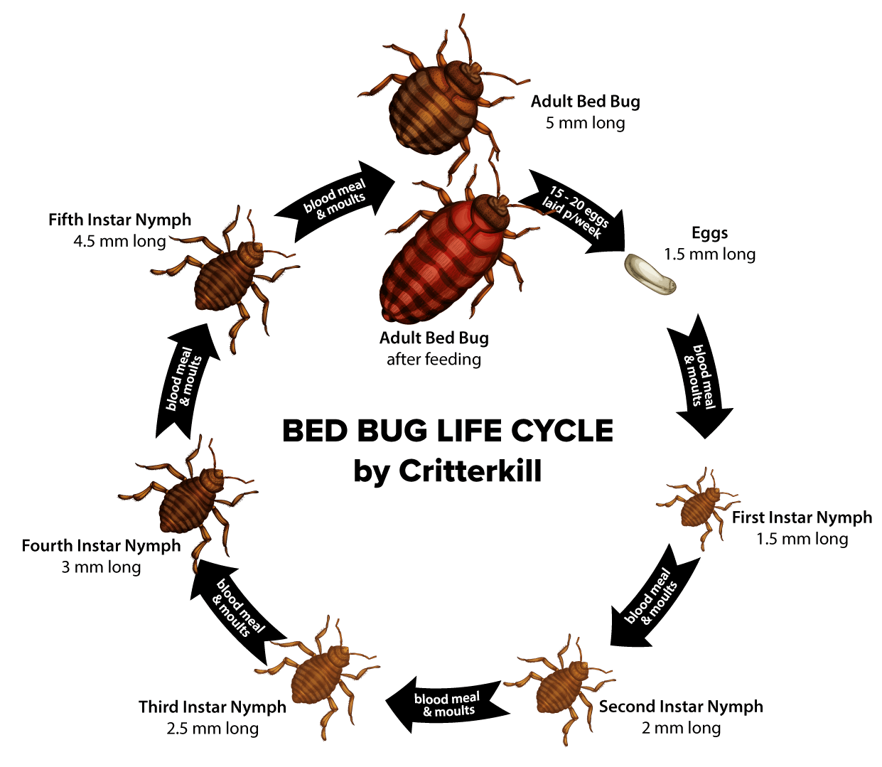 How to get rid of bed bugs the signs