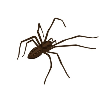Home Spider Treatments