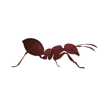 Home Ant Treatments