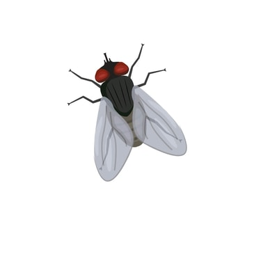 Home Flying Insect Killers