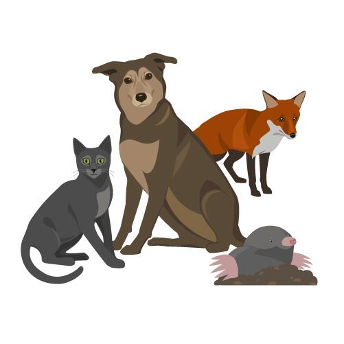 Cat, Dog, Fox Repellents, Mole Spikes